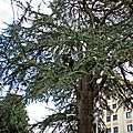 IMG_6783a