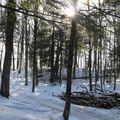 Au coeur de la forêt en hiver (2)