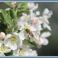 Le plein de pollen !