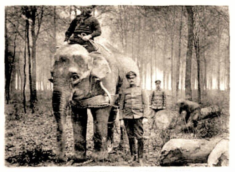 FELLERIES-L'éléphant Jenny