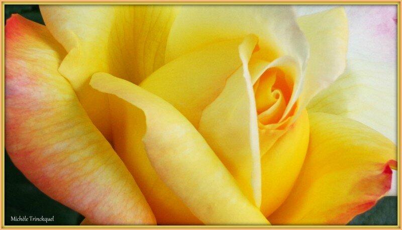 Coeur de rose 2705152