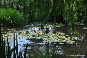 conches_giverny_083
