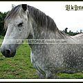 chevaux à Moréac 37