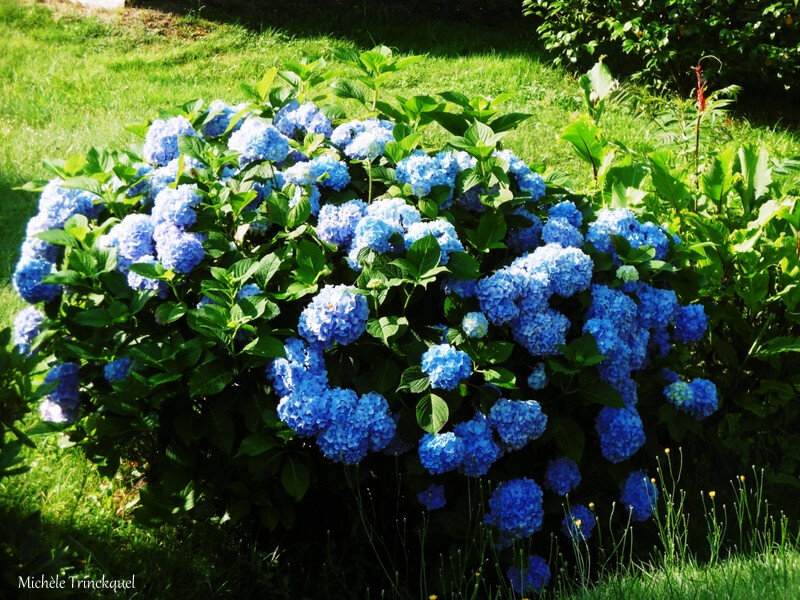 Fleurs de Léon 010718