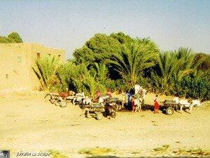 Scène de la vie quotidienne des égyptiens