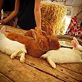 Les petits lapins de la fêtes médiévale des arcs sur argens