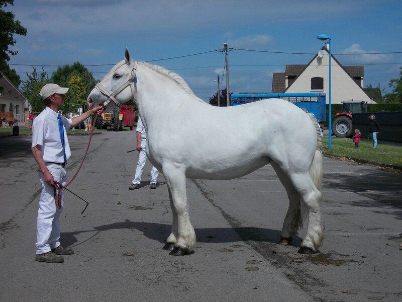 Quolibet du Boncoin - 3e Non Suitées - Local d'Arneke - 18 Juin 2015 - Photo Babeth