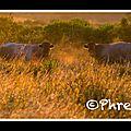 2jours biganos © Phred 2013_99
