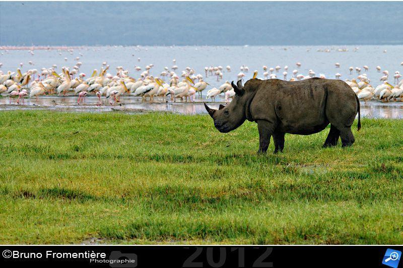 rhinocéros 800 d