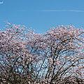 1-Fleurs de Léon 030319