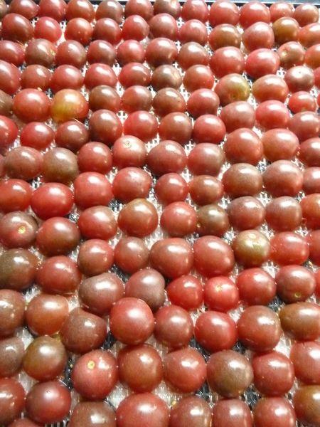 30-tomates cerises chocolat (3)