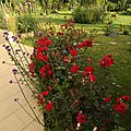 Windows-Live-Writer/jardin_D005/DSCF3880