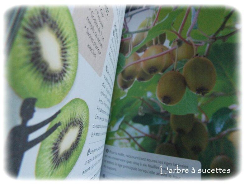 graines de kiwi 035