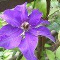 Les Fleurs Du jardin L'Eté