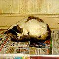 [grif'ethique] « un chat ca se debrouille »? non ! ca a de la chance, ou pas… c' est selon.