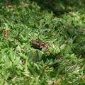 Povr grenouille -> bouffée 5 in plus tard par les fourmis