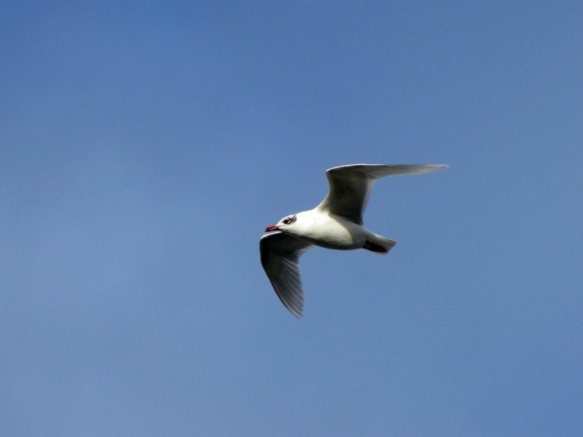 Oiseaux ile de re foto Mo2 (56)-h1500