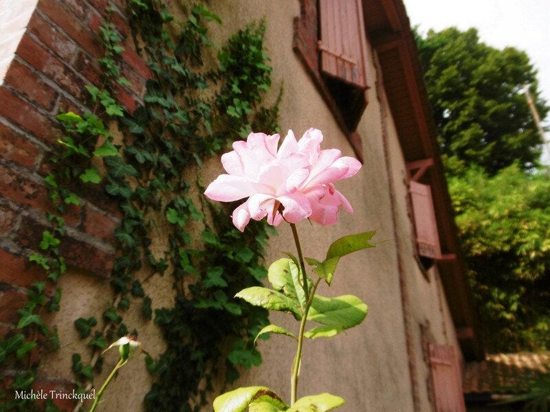 1-Fleurs de Léon 030719