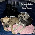 Titou (clair) Tarzan (charbonné) Tornado Tadou (noirs)