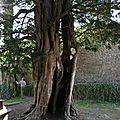 IMG_1130 Gestion des vieux arbres 2011.