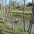 Pierrelatte, près du Canal Donzère-Mondragon