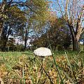 57_champignons_4