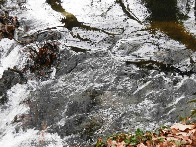 Etang de la Glacière 040118