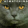illustrated_cat_watching