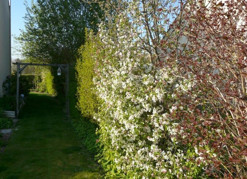 Malus everest (2)