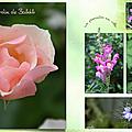 Les fleurs de Babette
