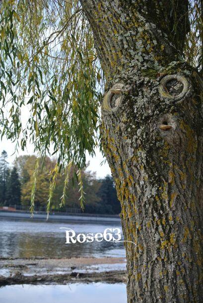 Rose 63 2