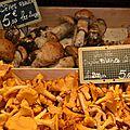 Le champignon : un végétal sans chlorophylle