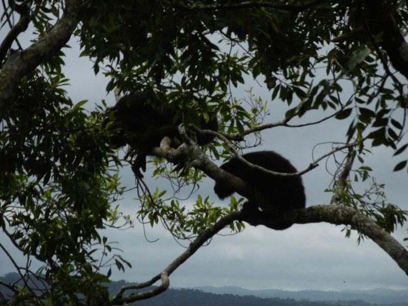 Site Tikal-singes Mono Arana (48)