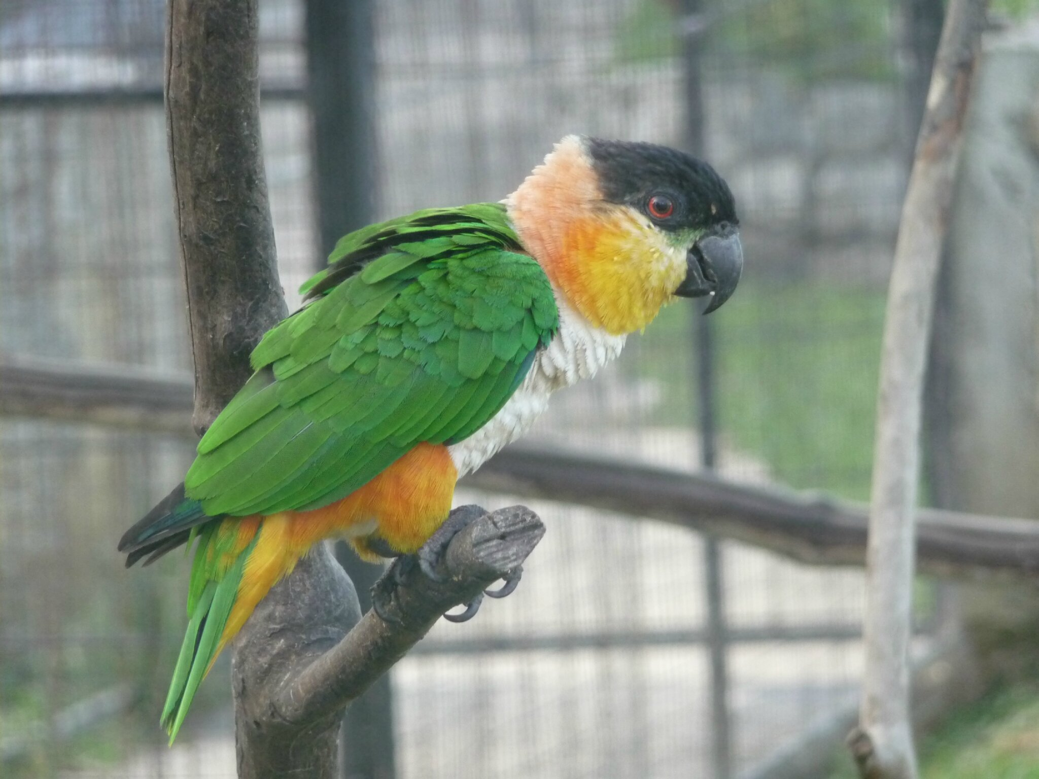 Montsinéry-Tonnegrande - zoo