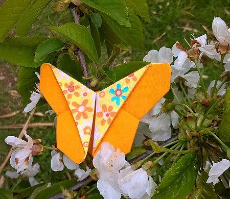 papillon Huloga 01