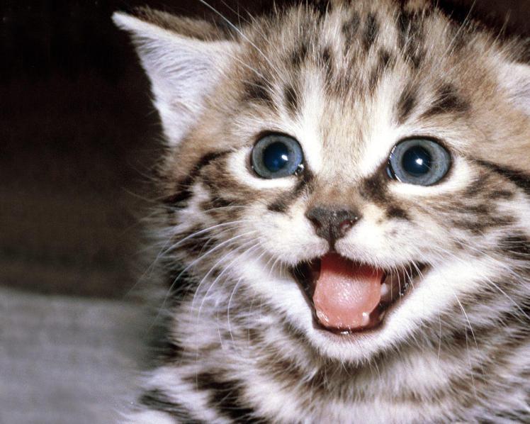 chat_heureux