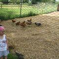Journée portes ouvertes des fermes