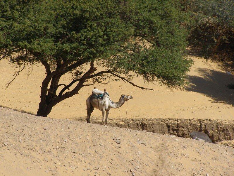Egypt2007 283
