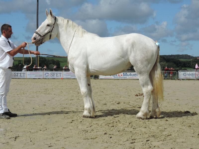 Houpette 26 - 5 Septembre 2020 - National Boulonnais - Samer (62) - 7e (3 ans - Petite Taille (moins d'1m68))