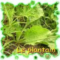 plantain_diaporama
