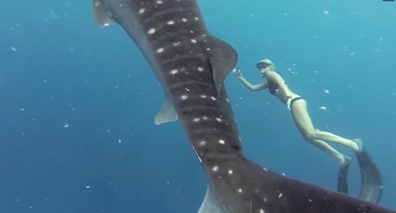 Ocean Ramsay et le requin baleine, juillet 2016