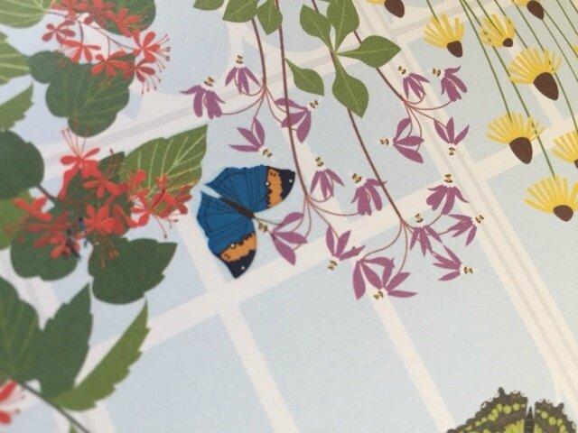 papillons et autres petites bêtes décalcomanies 4