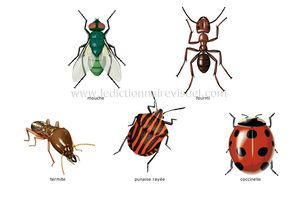 exemples-insectes-287283