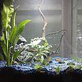 mon aquarium !