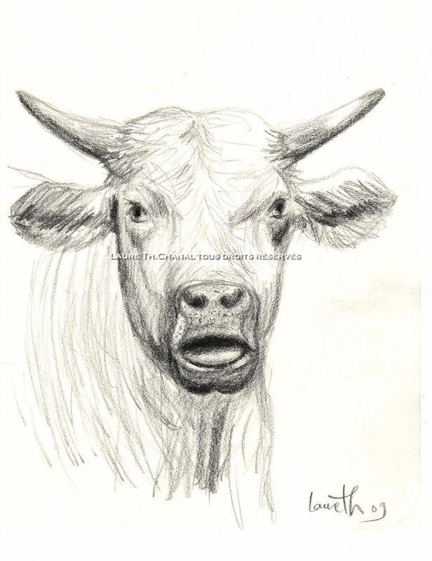 vache au crayon
