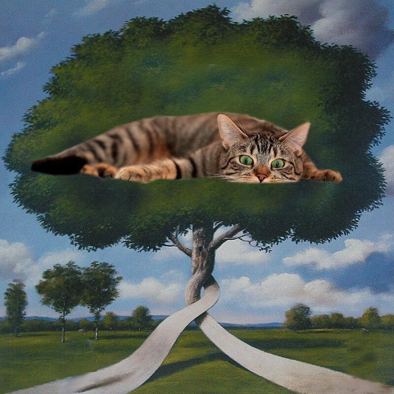 carte chat le monde vu de haut
