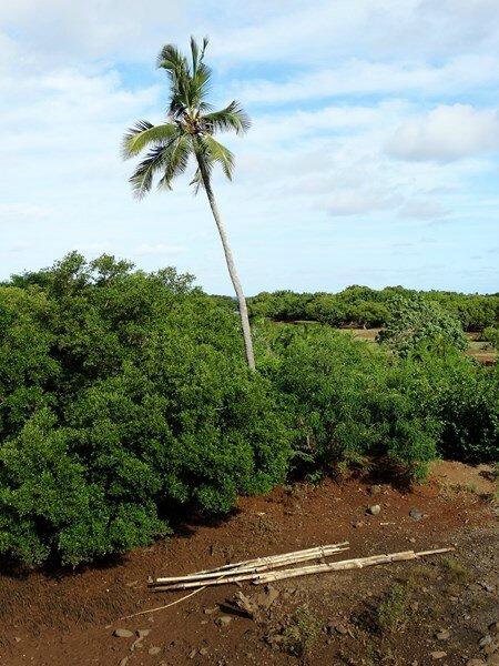 Mayotte (41)