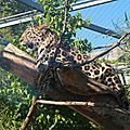 cdv_20140515_06_zoo