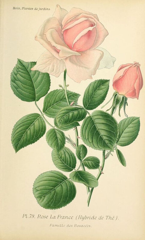 Boîte ronde roses (1)