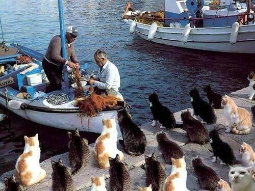 chat poisson humour